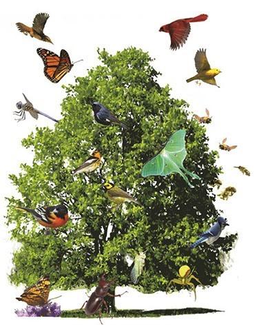 Bird Diversity on Native Trees