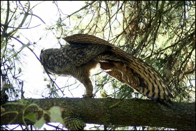 Birding in the Toronto Ravines